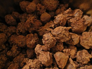 chokladnötter